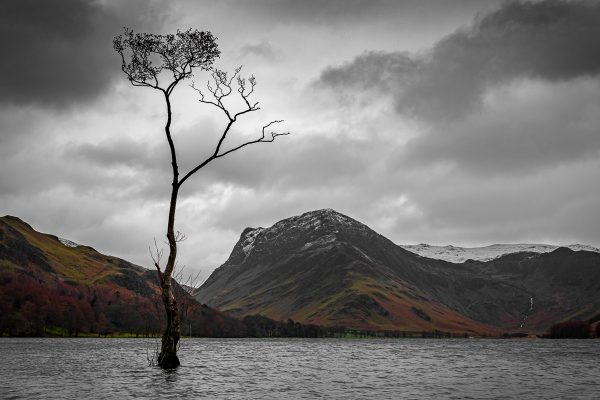 The Lonely Tree - Buttermere