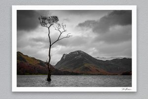 The Lonely Tree - Buttermere - Framed