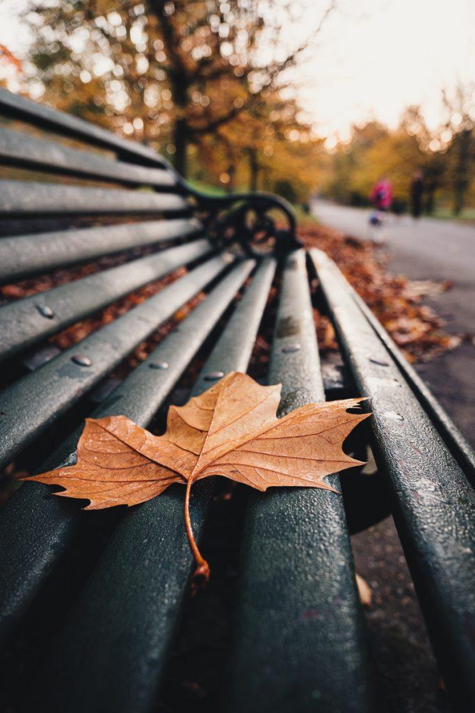 Autumn Leaf - Greenwich Park