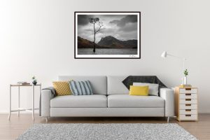 The Lonely Tree - Living Room Example